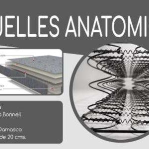muelles anatomico